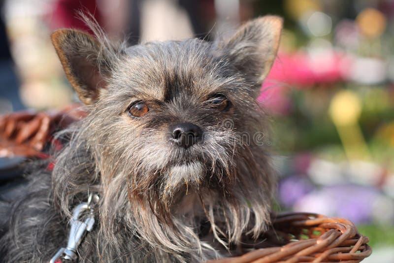 Perro en una cesta fotografía de archivo libre de regalías