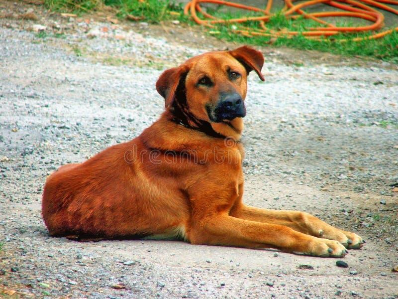 Perro en una granja fotografía de archivo