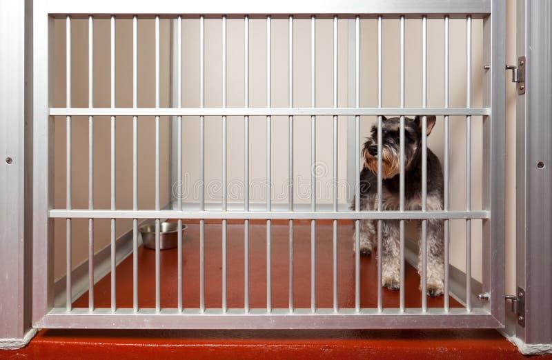 Perro en una jaula.