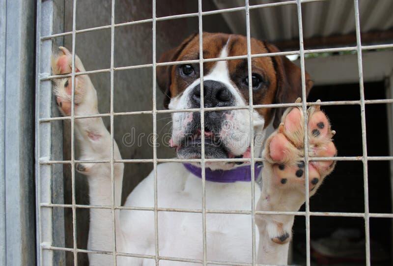 Perro en una jaula fotos de archivo libres de regalías