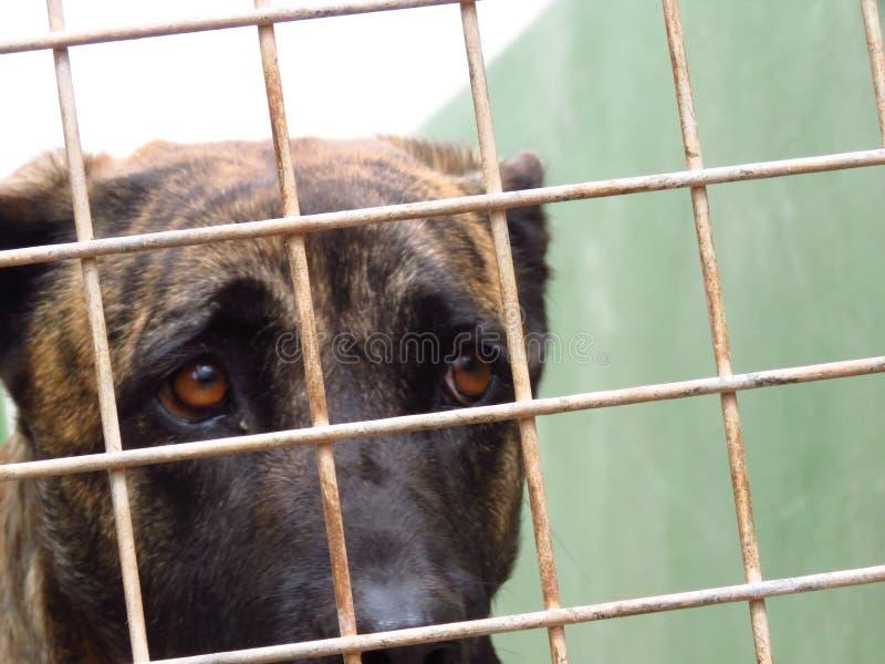 Perro en una perrera imagenes de archivo