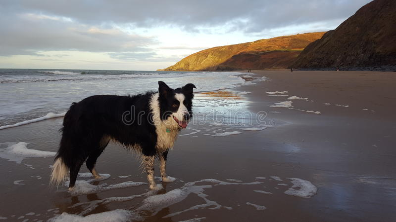 Perro en una playa fotografía de archivo