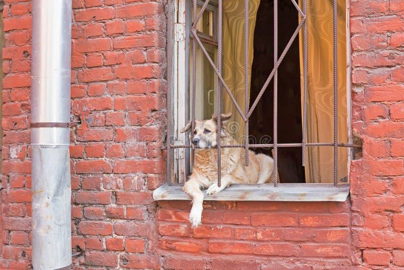 Download Perro en ventana imagen de archivo. Imagen de curioso - 42440779