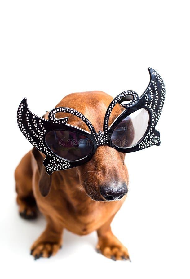 Perro en vidrios festivos foto de archivo libre de regalías
