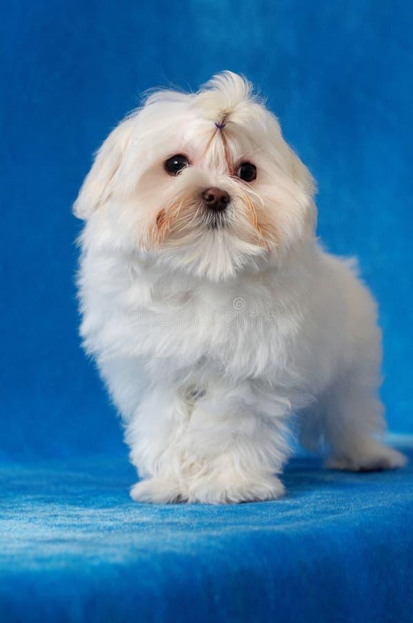 Perro encantador fotografía de archivo
