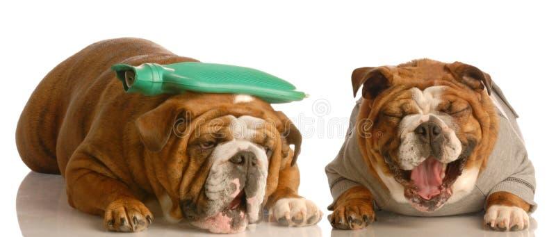 Download Perro enfermo foto de archivo. Imagen de salud, canino - 7283968