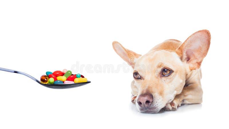 Perro enfermo enfermo foto de archivo
