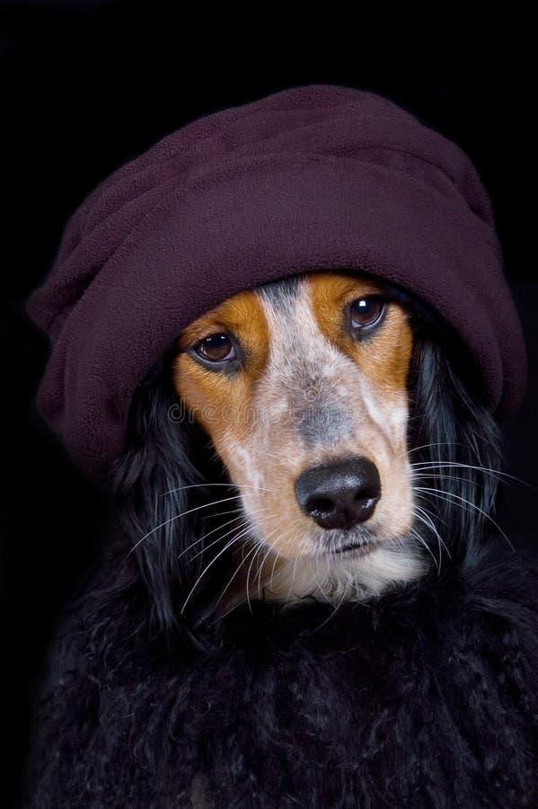 Perro engreído de la diva con el sombrero y boa foto de archivo
