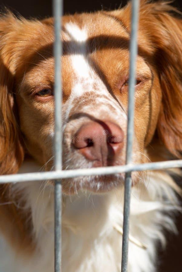Perro enjaulado imagen de archivo libre de regalías
