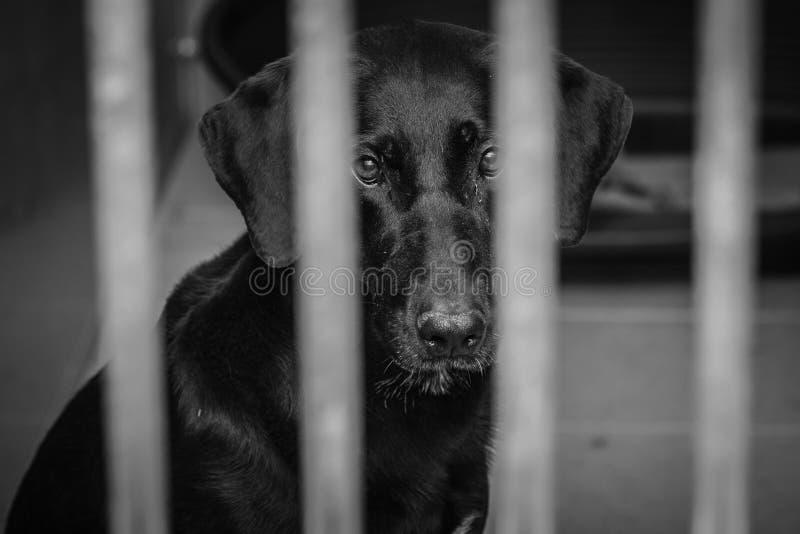 Perro enjaulado en un refugio para animales fotografía de archivo libre de regalías