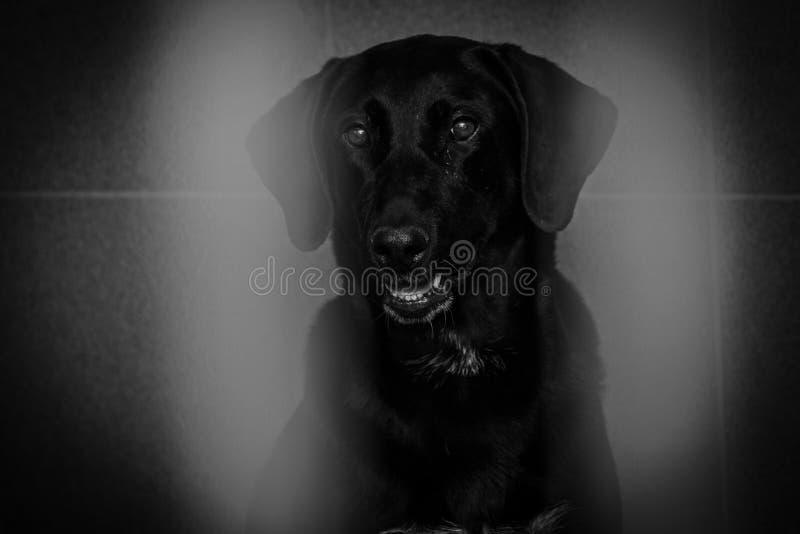Perro enjaulado en un refugio para animales imágenes de archivo libres de regalías