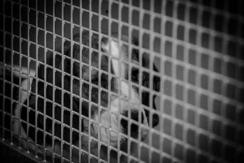 Perro enjaulado en un refugio para animales fotos de archivo libres de regalías