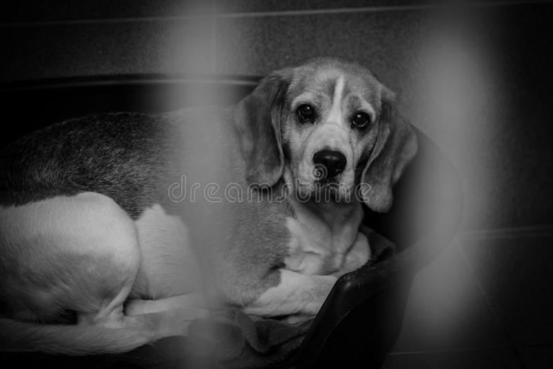 Perro enjaulado en un refugio para animales imagen de archivo libre de regalías