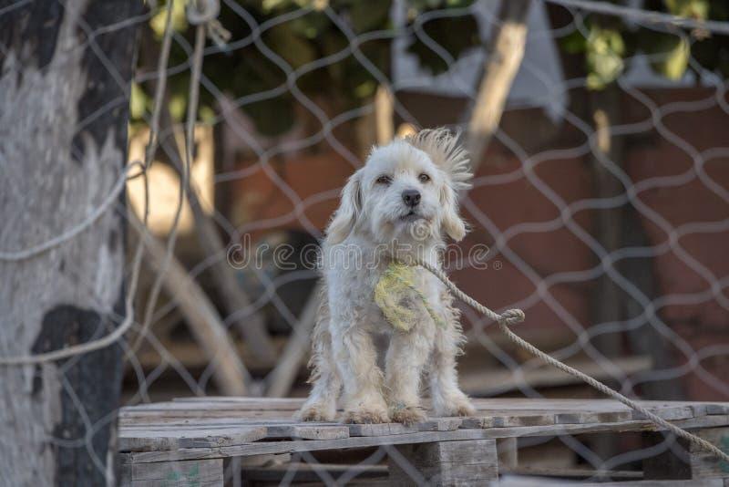 Perro enjaulado triste imagen de archivo