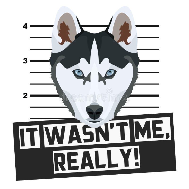 Perro esquimal de la fotograf?a de detenido del Mugshot libre illustration