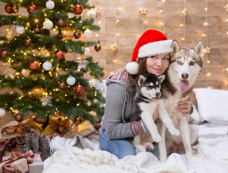 Perro esquimal de la mujer, del perro y del perrito, árbol de navidad, sombrero foto de archivo