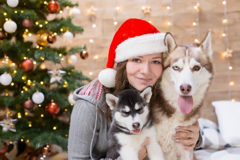 Perro esquimal de la mujer, del perro y del perrito, árbol de navidad, sombrero imagen de archivo libre de regalías