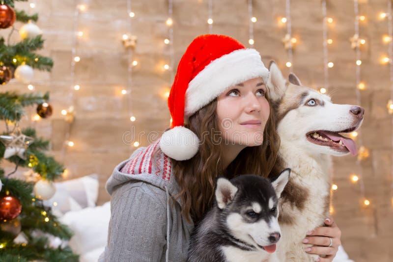 Perro esquimal de la mujer, del perro y del perrito, árbol de navidad, sombrero fotos de archivo
