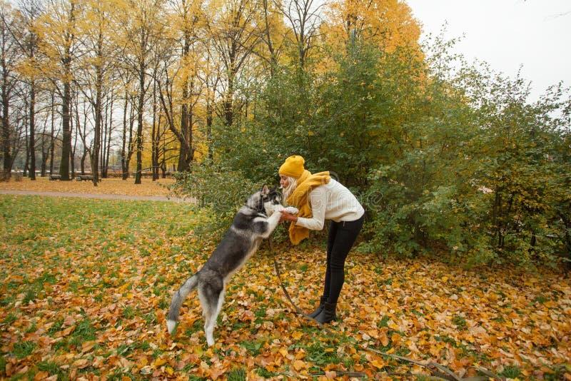 Perro esquimal de la mujer y del animal doméstico al aire libre foto de archivo
