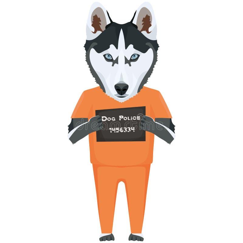 Perro esquimal del perro de la ropa de la prisi?n del Mugshot ilustración del vector