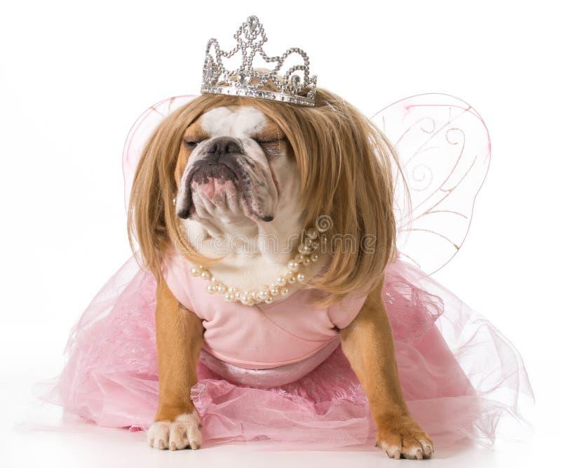 Perro estropeado foto de archivo libre de regalías
