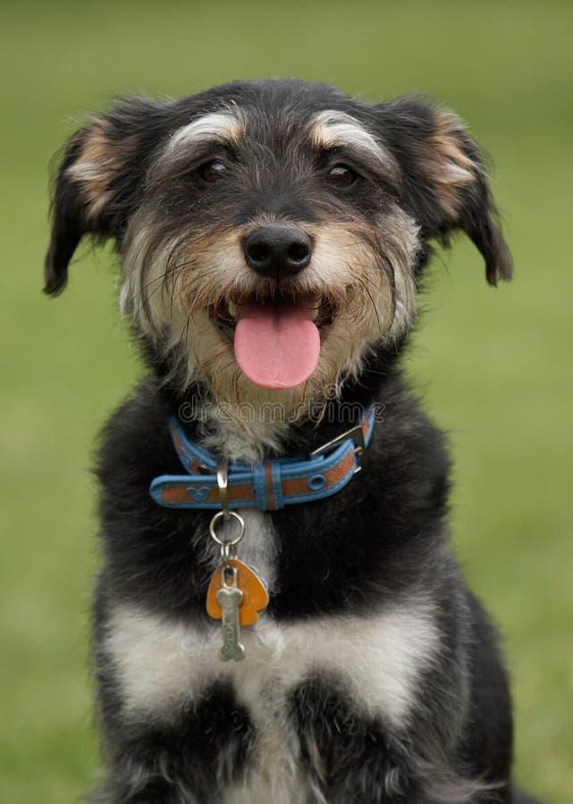 Perro feliz fotografía de archivo libre de regalías