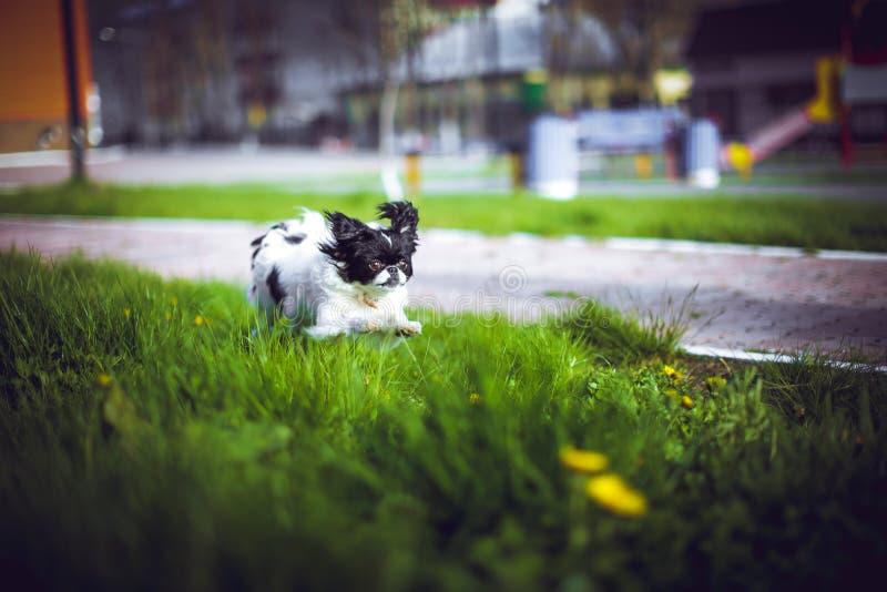 Perro feliz corriente foto de archivo libre de regalías