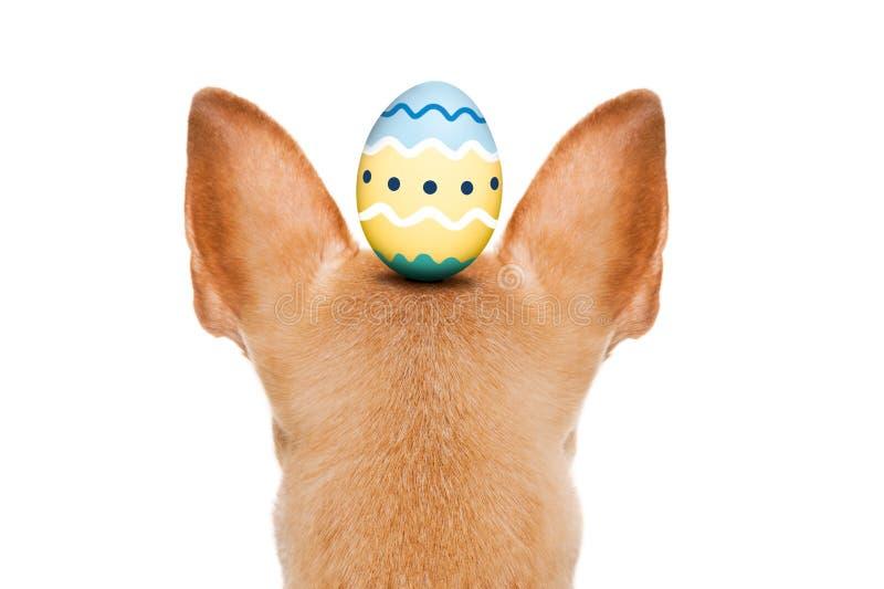 Perro feliz de pascua con el huevo imágenes de archivo libres de regalías
