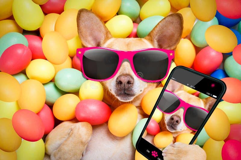 Perro feliz de pascua con el selfie de los huevos foto de archivo libre de regalías