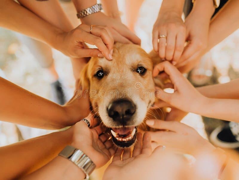 perro feliz del golden retriever con la mano del manr en el suyo Parque en fondo imagen de archivo