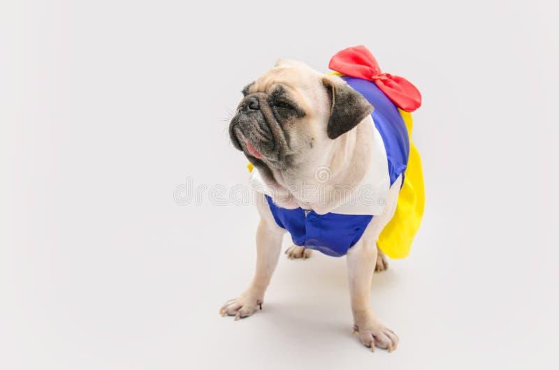 Perro femenino estropeado - el barro amasado lindo del perrito se vistió como una princesa en w imagenes de archivo
