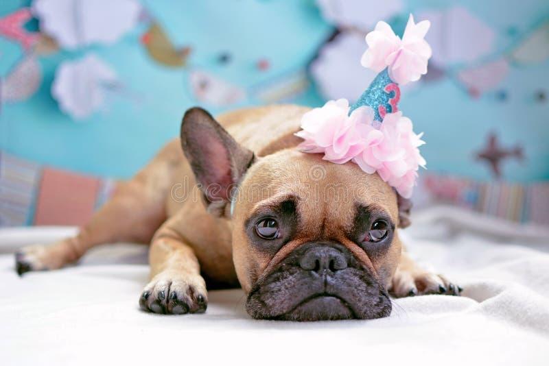 Perro femenino marrón de mentira lindo del dogo francés con el sombrero del cumpleaños y el fondo rosados de los azules cielos stock de ilustración