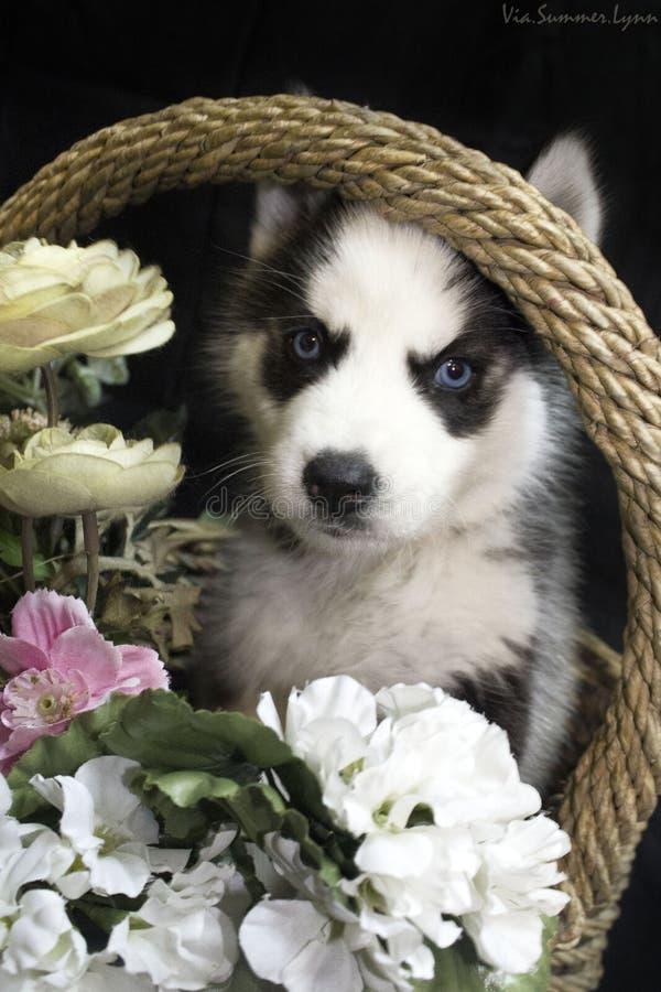 Perro fornido imagen de archivo libre de regalías