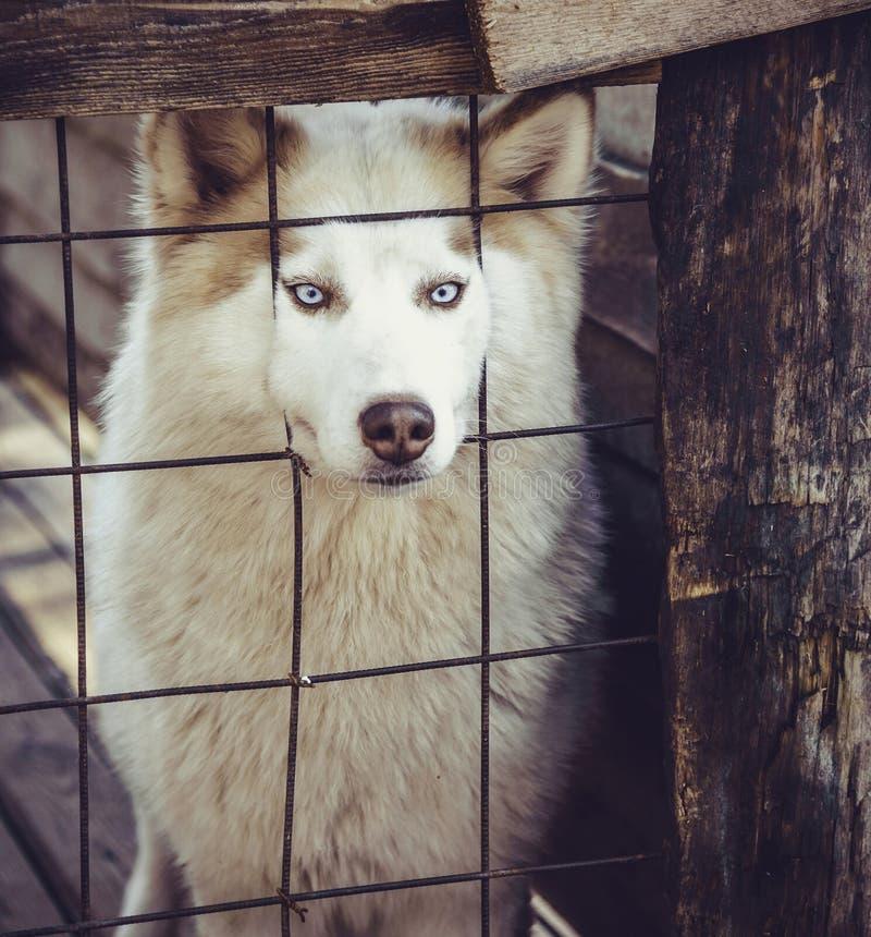 Perro fornido precioso fotografía de archivo