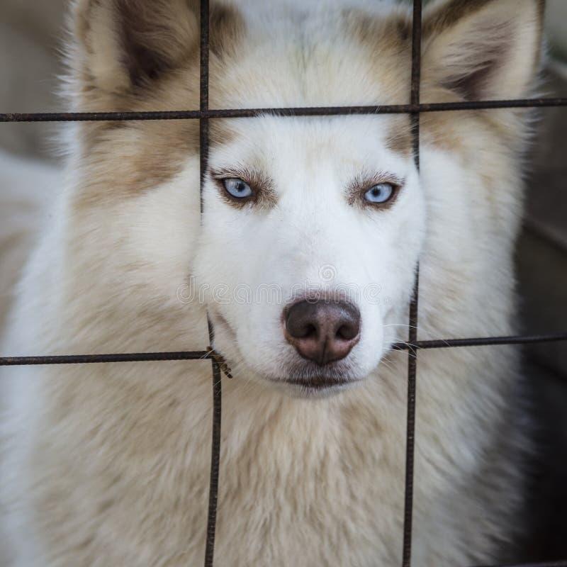 Perro fornido precioso imagen de archivo