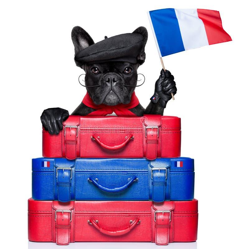 Download Perro francés foto de archivo. Imagen de humor, aislado - 41905872