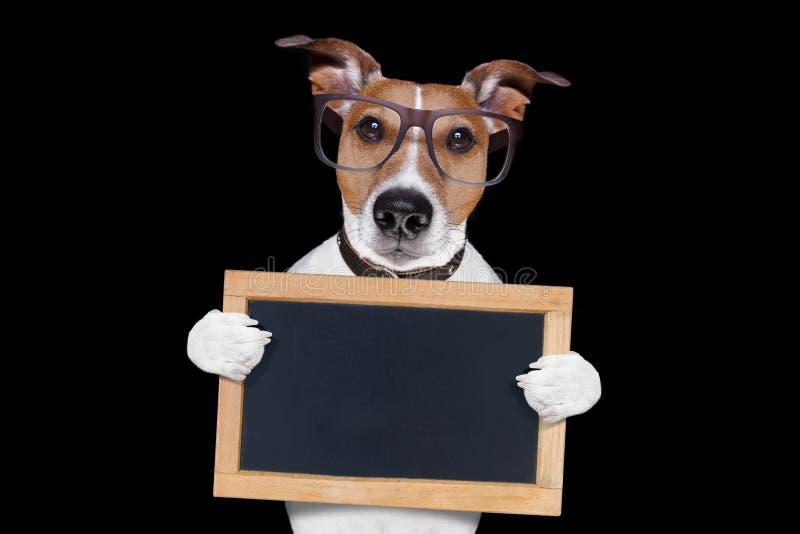 Perro fresco de los vidrios imagen de archivo