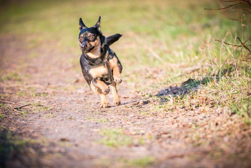 Perro funcionado con en prado imagen de archivo libre de regalías