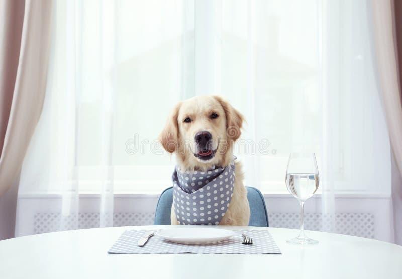Perro gracioso aguantando la comida en la mesa en el interior fotografía de archivo libre de regalías