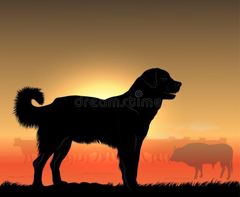 Perro grande del vaquero imágenes de archivo libres de regalías