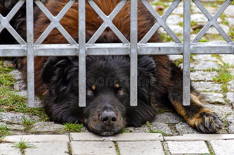 Perro grande detrás de la cerca foto de archivo libre de regalías