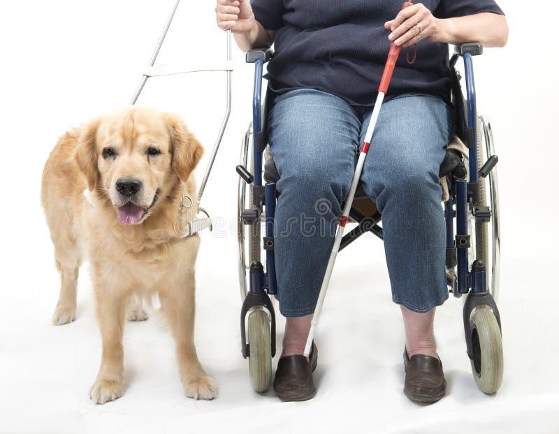 Perro guía y silla de ruedas aislados en blanco fotos de archivo