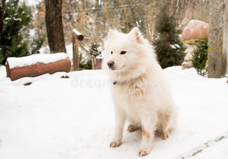 Perro guardián blanco en la yarda foto de archivo