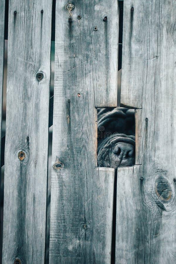 Perro guardián detrás de la cerca foto de archivo