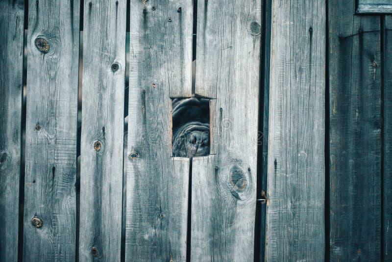 Perro guardián detrás de la cerca imagen de archivo libre de regalías
