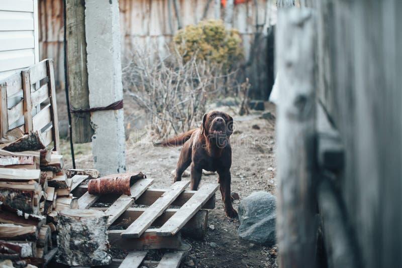 Perro guardián detrás de la cerca fotografía de archivo libre de regalías