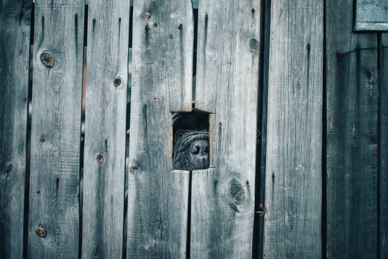 Perro guardián detrás de la cerca imagen de archivo