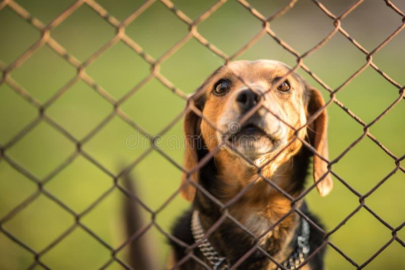 Perro guardián lindo detrás de la cerca, raspando imagen de archivo