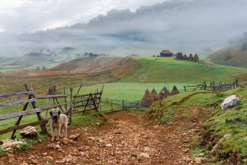 Perro guardi?n lindo que guarda la entrada a la zona rural remota viva e impresionante, Fundatura Ponorului, Rumania fotografía de archivo