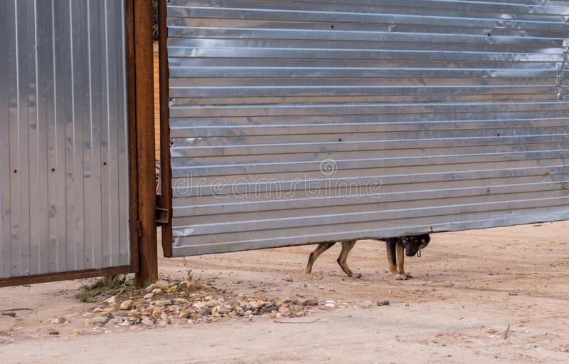 Perro guardián que mira hacia fuera de debajo la cerca fotografía de archivo libre de regalías
